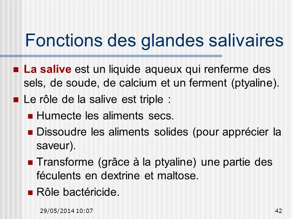 Fonctions des glandes salivaires