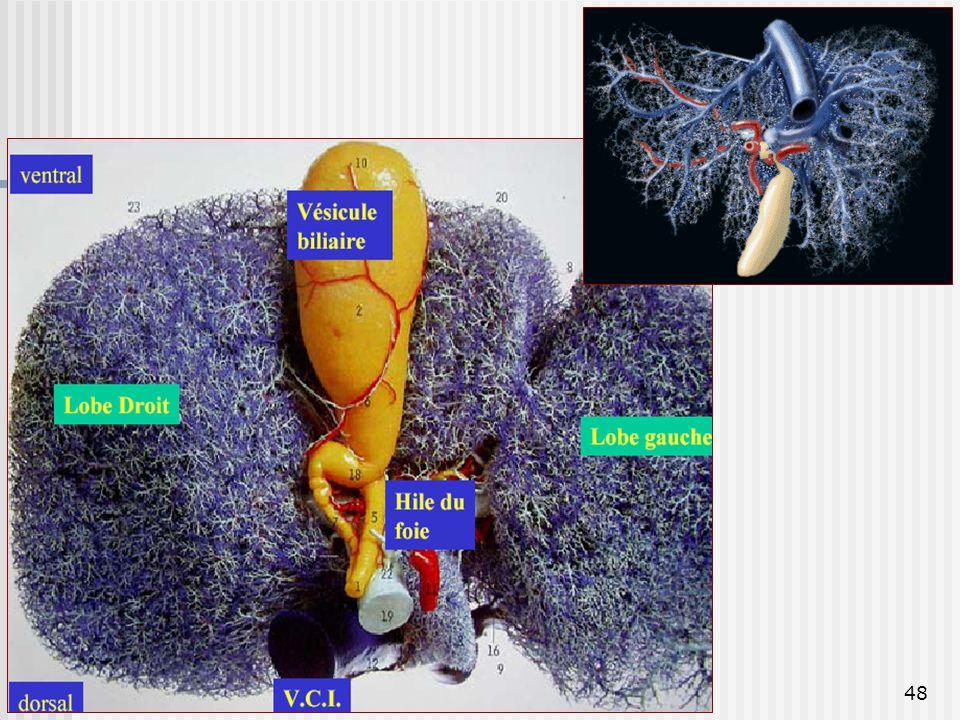 Dr. BAYOUD - Appareil digestif
