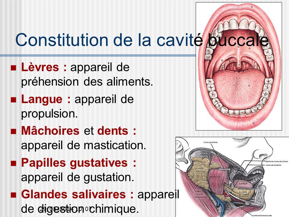 Constitution de la cavité buccale