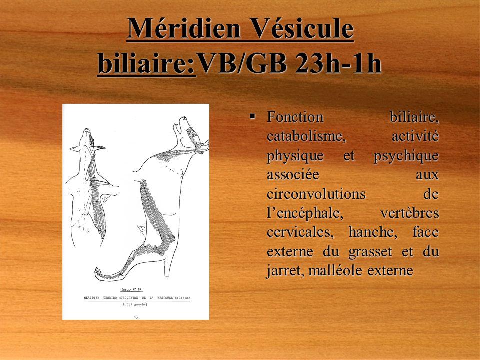Méridien Vésicule biliaire:VB/GB 23h-1h