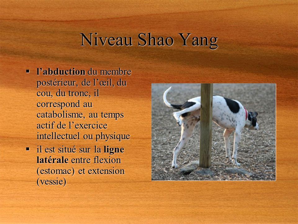 Niveau Shao Yang