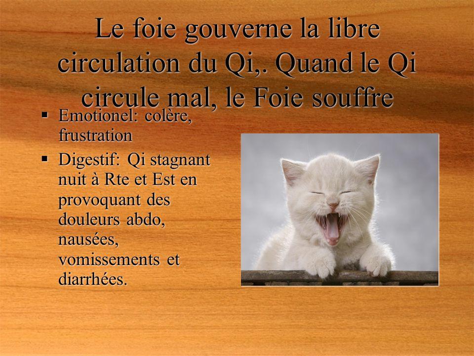 Le foie gouverne la libre circulation du Qi,