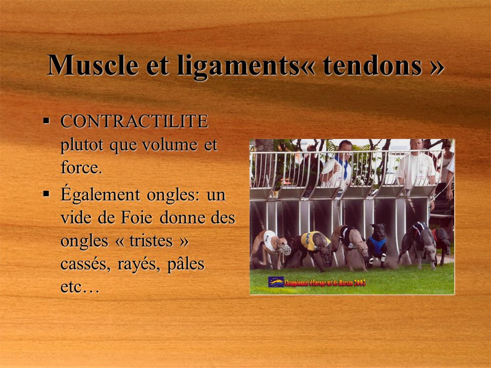 Muscle et ligaments« tendons »