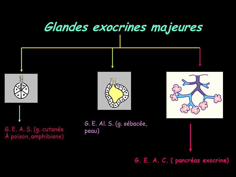 Glandes exocrines majeures G. E. A. C. ( pancréas exocrine)