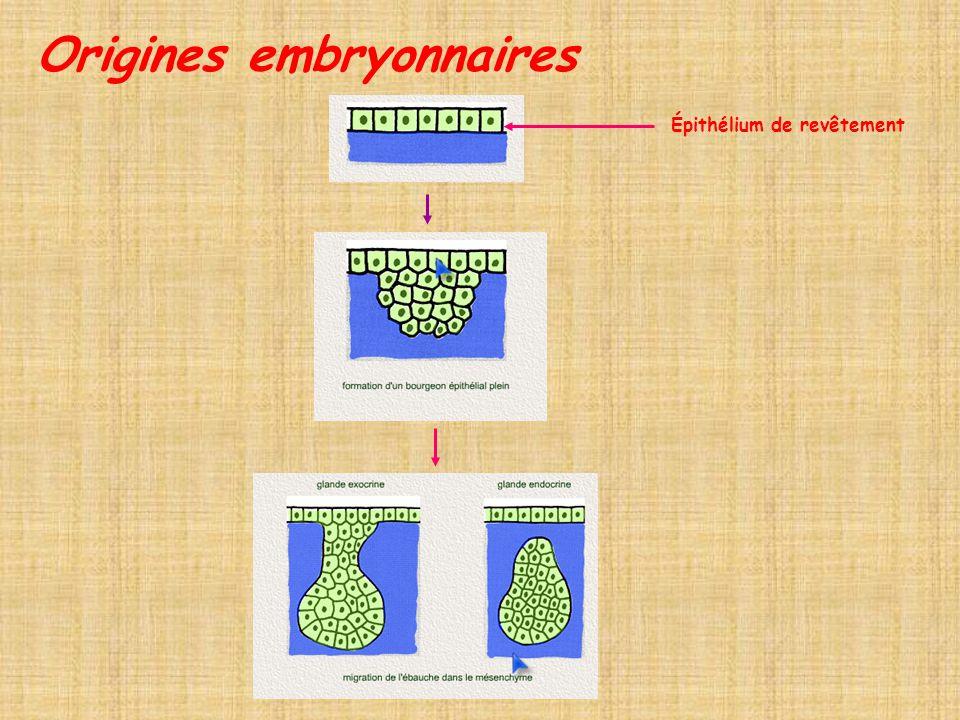 Origines embryonnaires