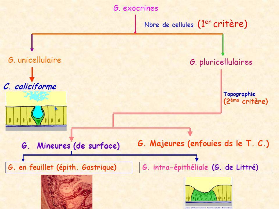 G. Majeures (enfouies ds le T. C.) G. Mineures (de surface)