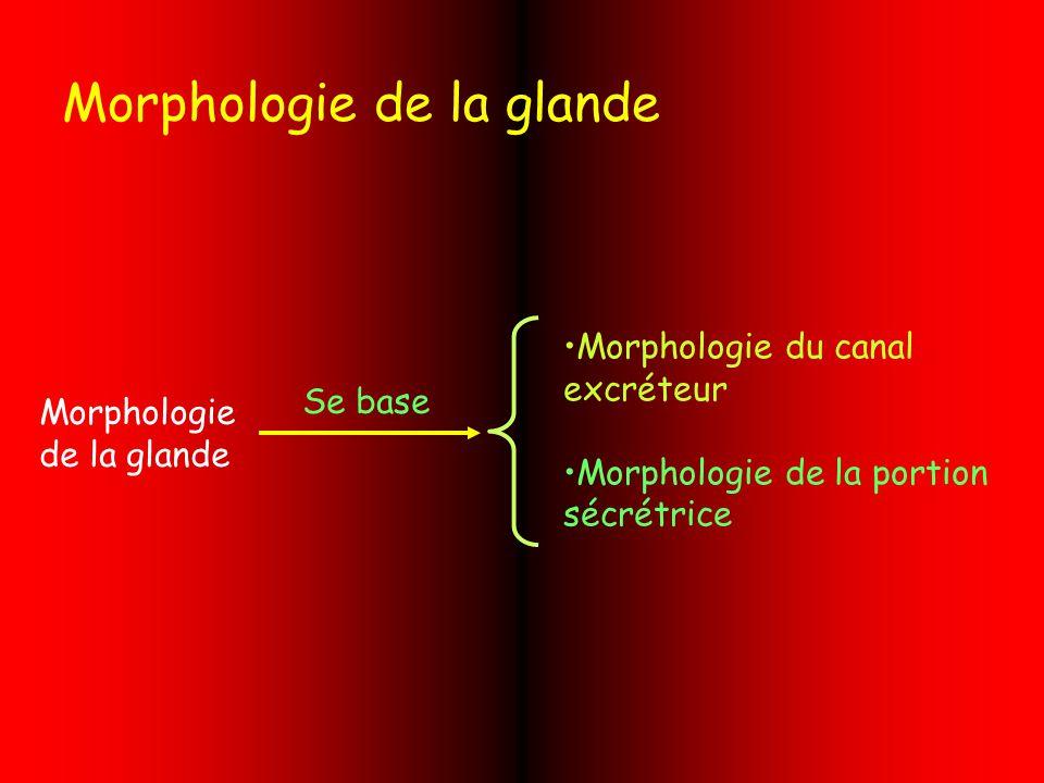 Morphologie de la glande