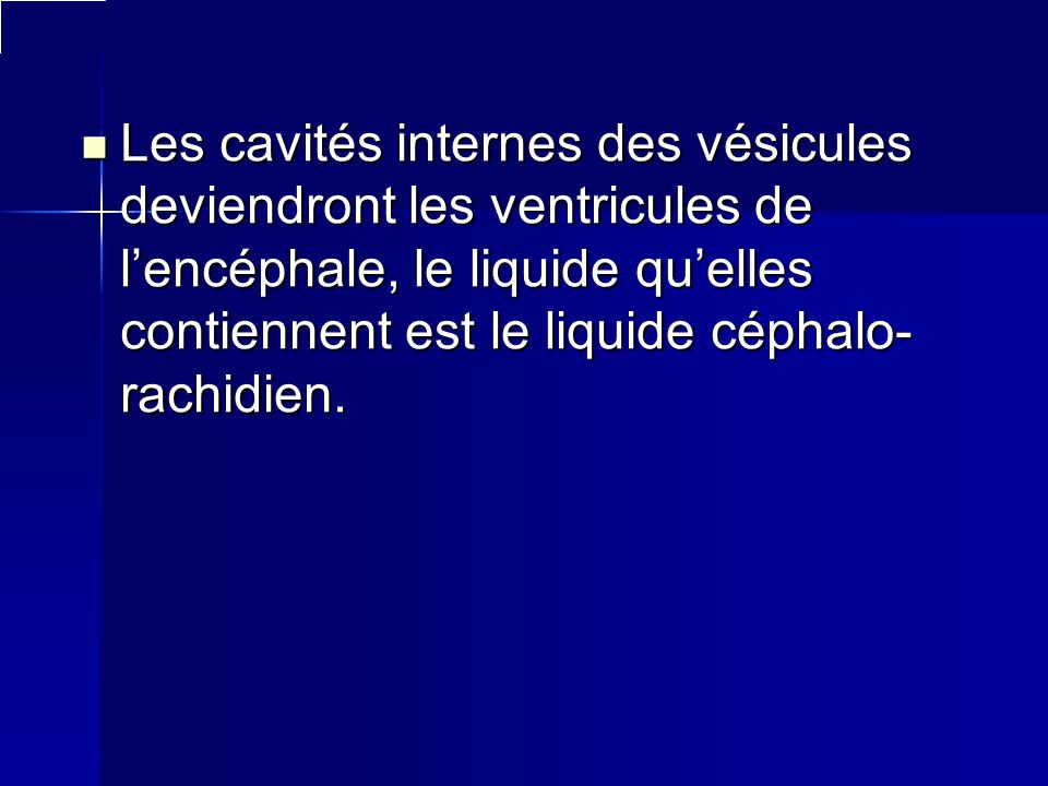 Les cavités internes des vésicules deviendront les ventricules de l'encéphale, le liquide qu'elles contiennent est le liquide céphalo-rachidien.