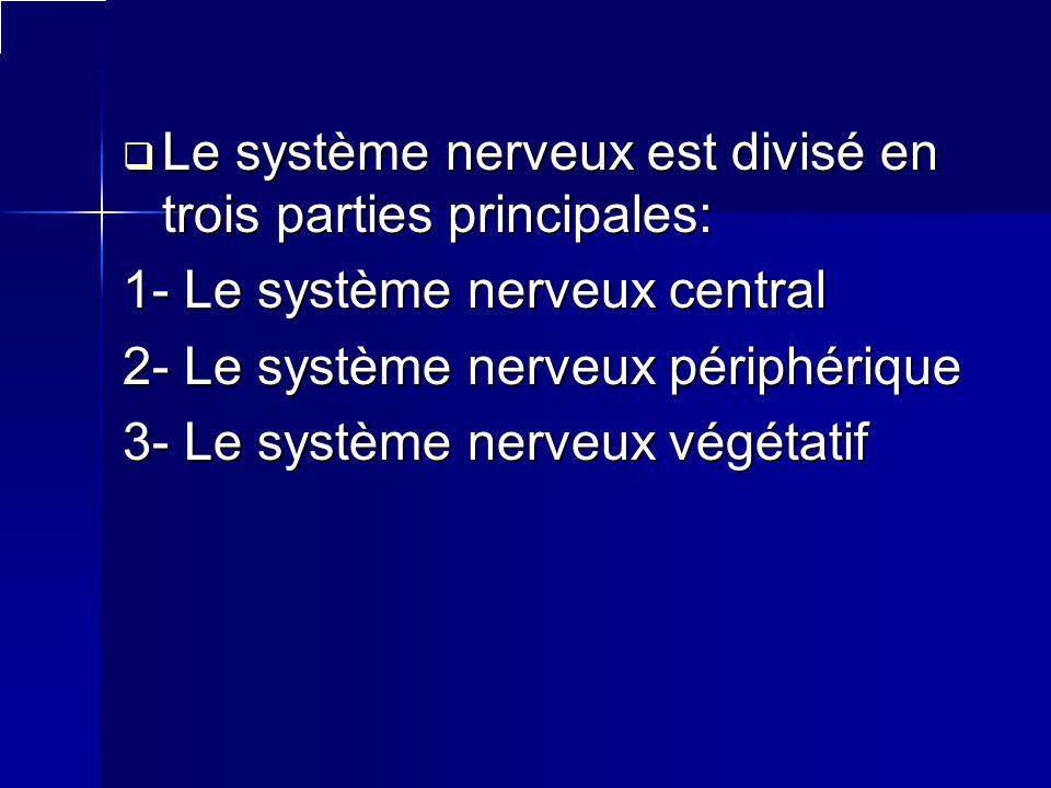 Le système nerveux est divisé en trois parties principales: