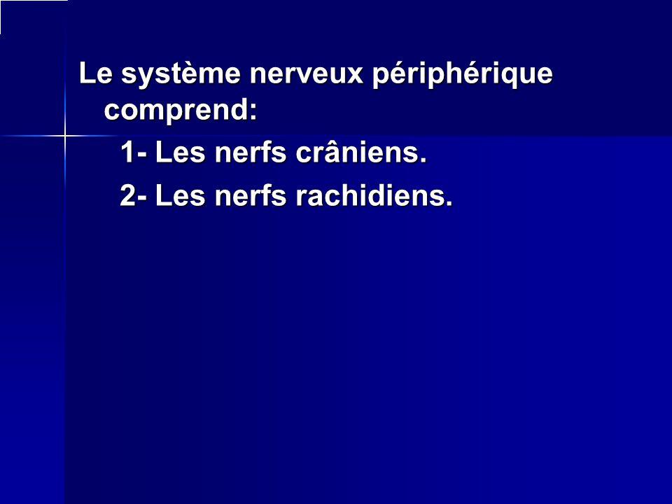 Le système nerveux périphérique comprend: