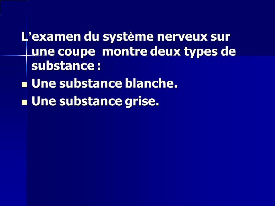 L'examen du système nerveux sur une coupe montre deux types de substance :