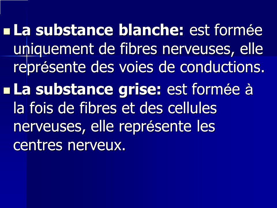 La substance blanche: est formée uniquement de fibres nerveuses, elle représente des voies de conductions.