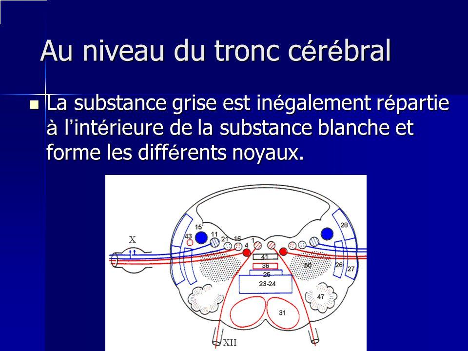 Au niveau du tronc cérébral