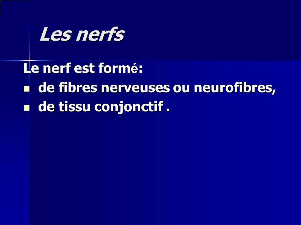 Les nerfs Le nerf est formé: de fibres nerveuses ou neurofibres,