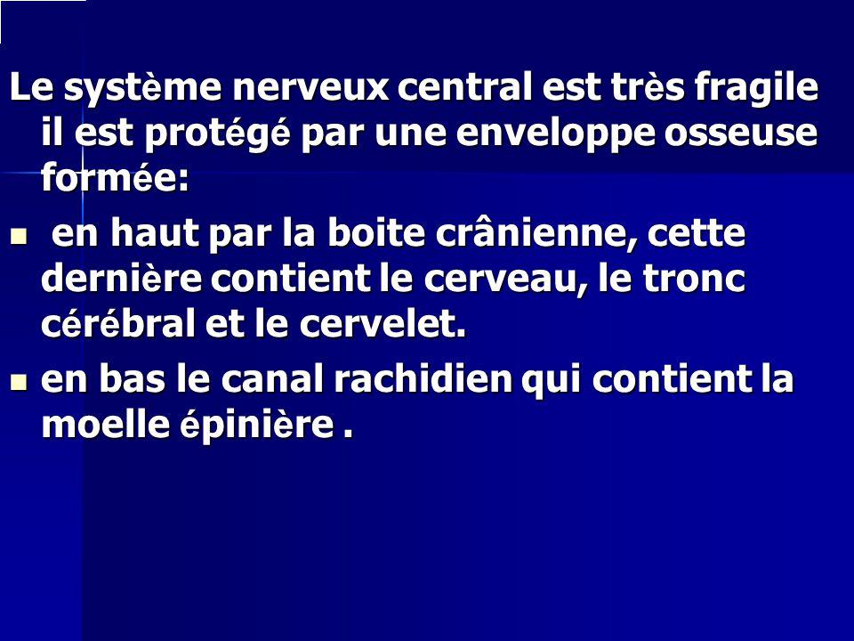 Le système nerveux central est très fragile il est protégé par une enveloppe osseuse formée: