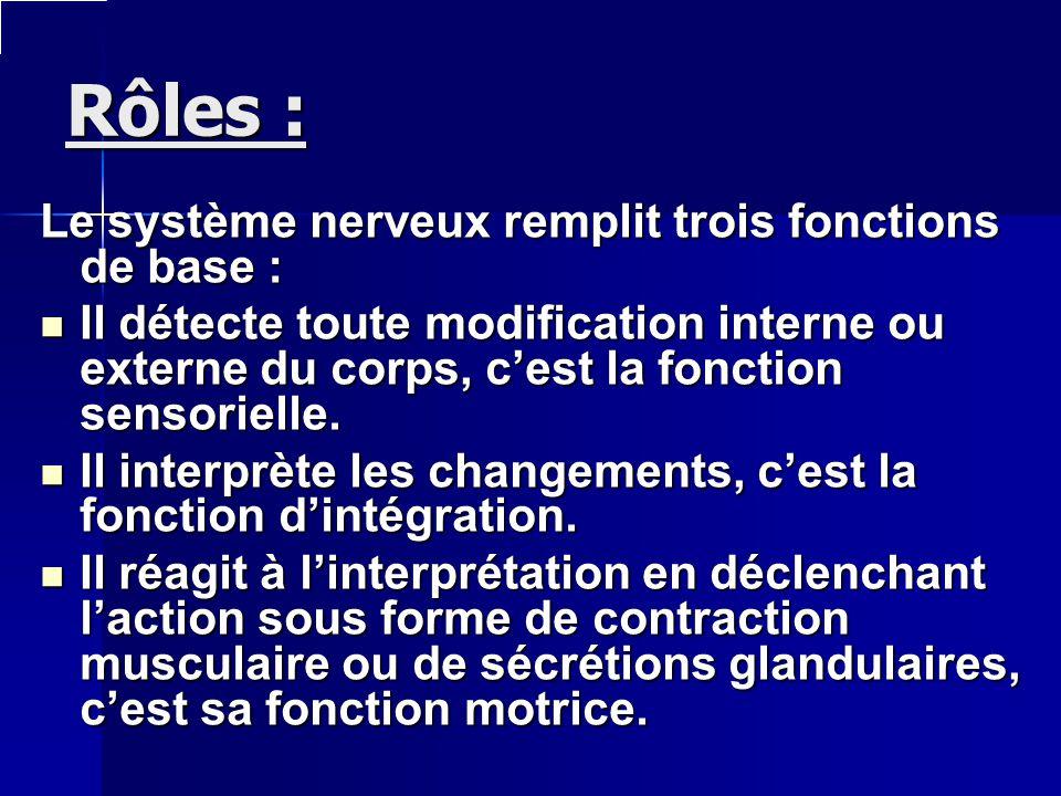 Rôles : Le système nerveux remplit trois fonctions de base :