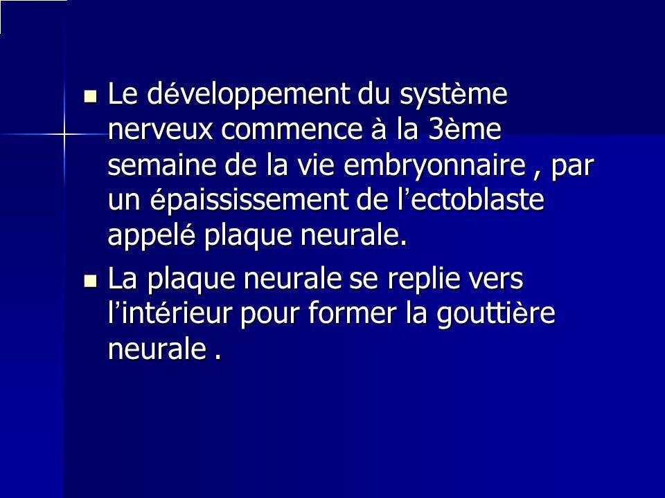 Le développement du système nerveux commence à la 3ème semaine de la vie embryonnaire , par un épaississement de l'ectoblaste appelé plaque neurale.