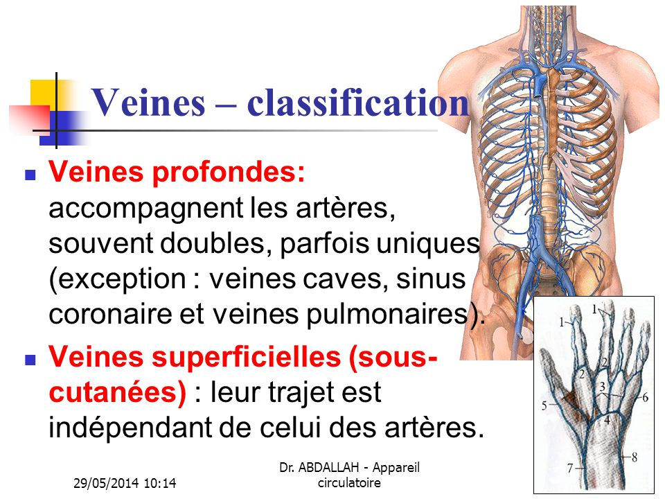 Veines – classification