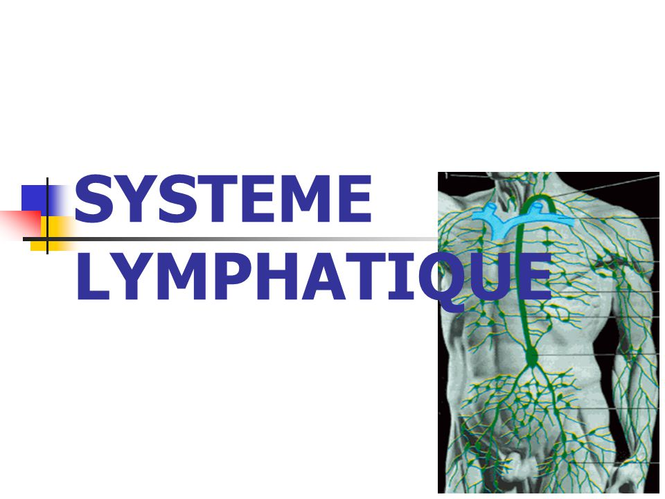 SYSTEME LYMPHATIQUE