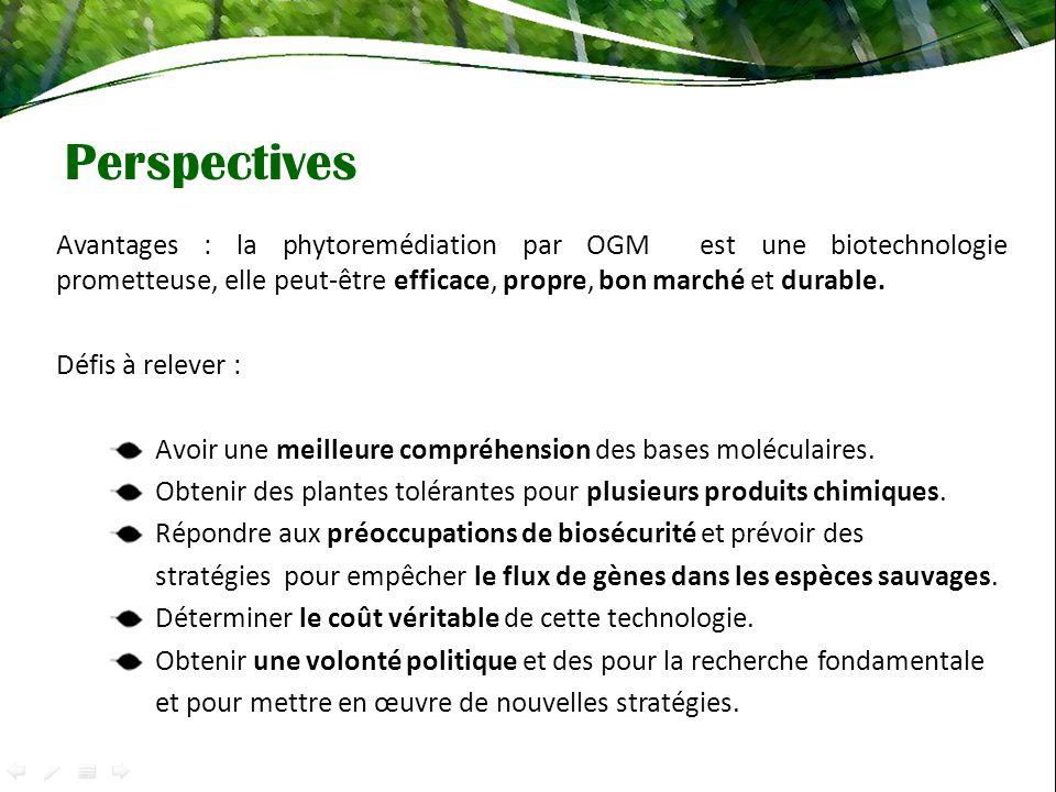 Perspectives Avantages : la phytoremédiation par OGM est une biotechnologie prometteuse, elle peut-être efficace, propre, bon marché et durable.