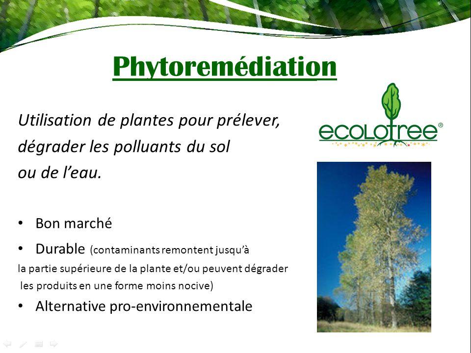Phytoremédiation Utilisation de plantes pour prélever,