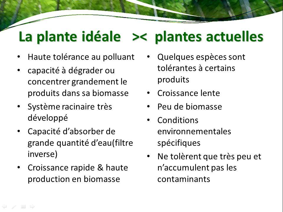 La plante idéale >< plantes actuelles
