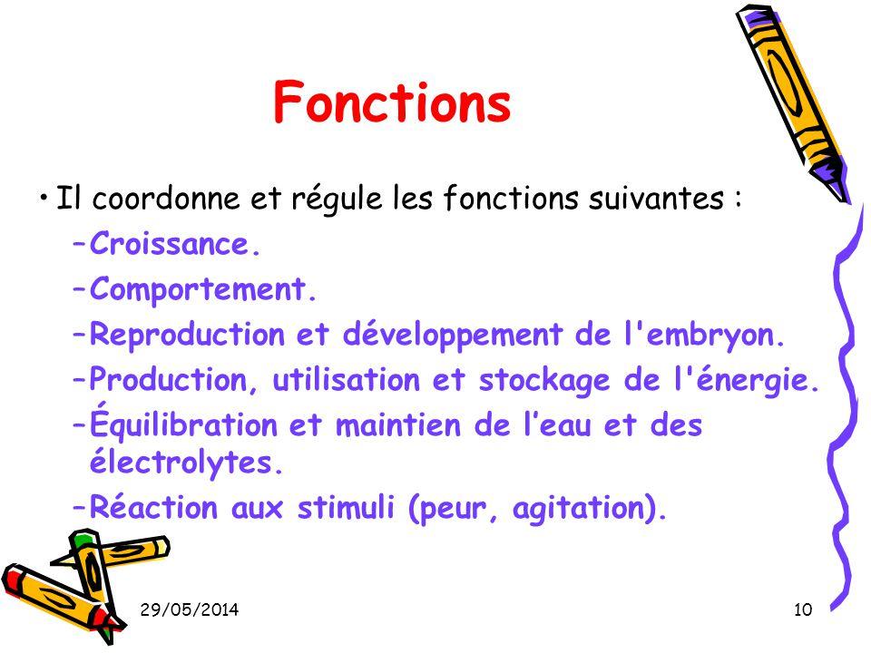 Fonctions Il coordonne et régule les fonctions suivantes : Croissance.