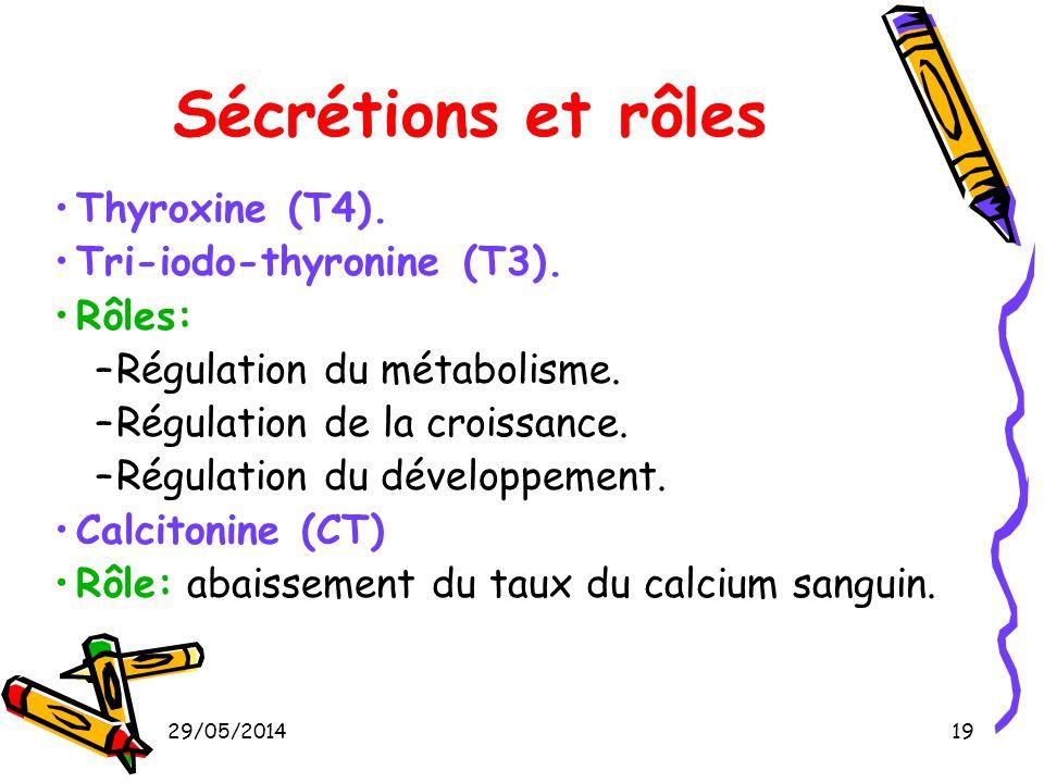 Sécrétions et rôles Thyroxine (T4). Tri-iodo-thyronine (T3). Rôles: