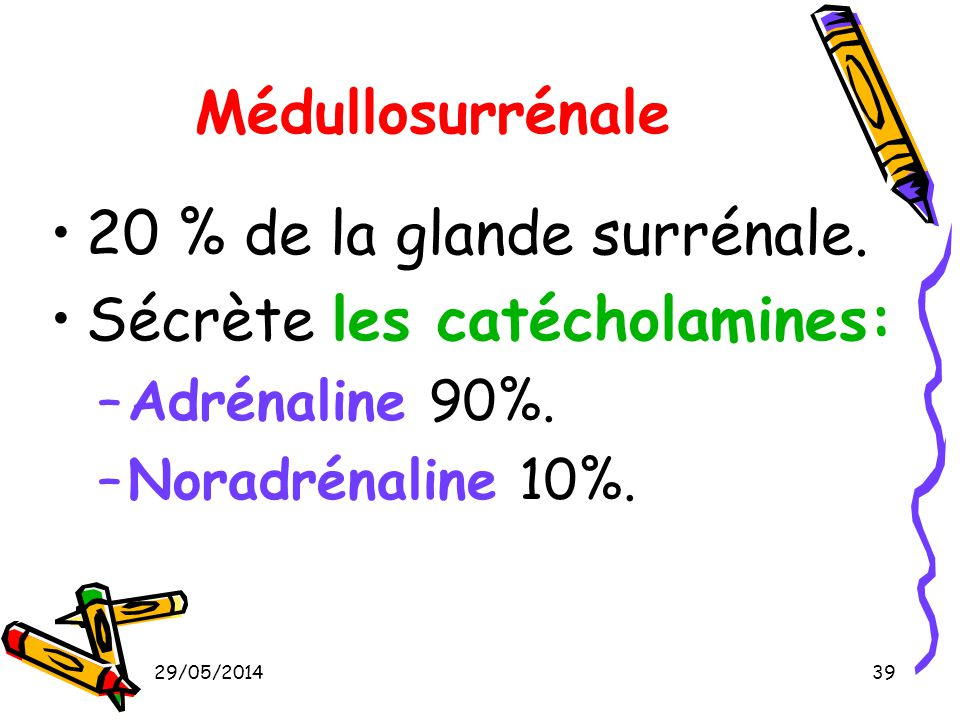 20 % de la glande surrénale. Sécrète les catécholamines: