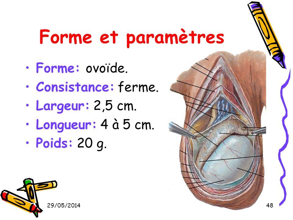 Forme et paramètres Forme: ovoïde. Consistance: ferme.