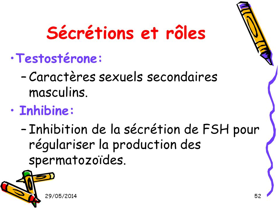 Sécrétions et rôles Testostérone:
