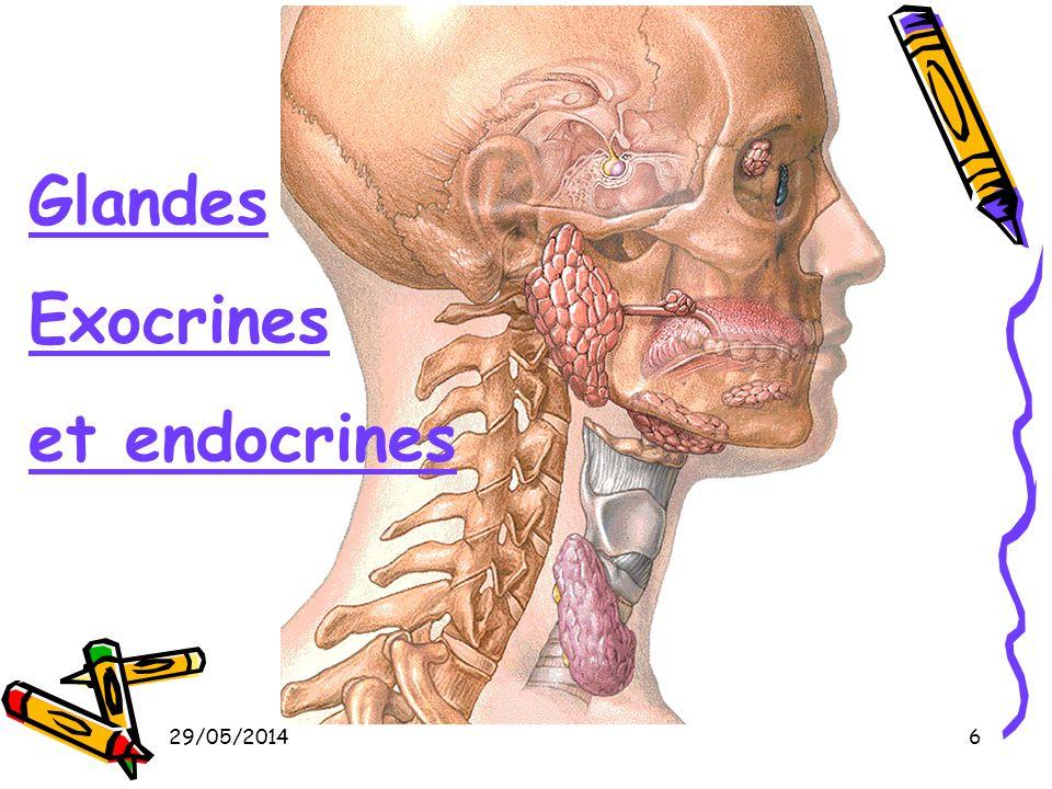 Glandes Exocrines et endocrines 31/03/2017
