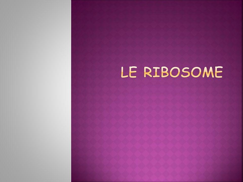 Le ribosome