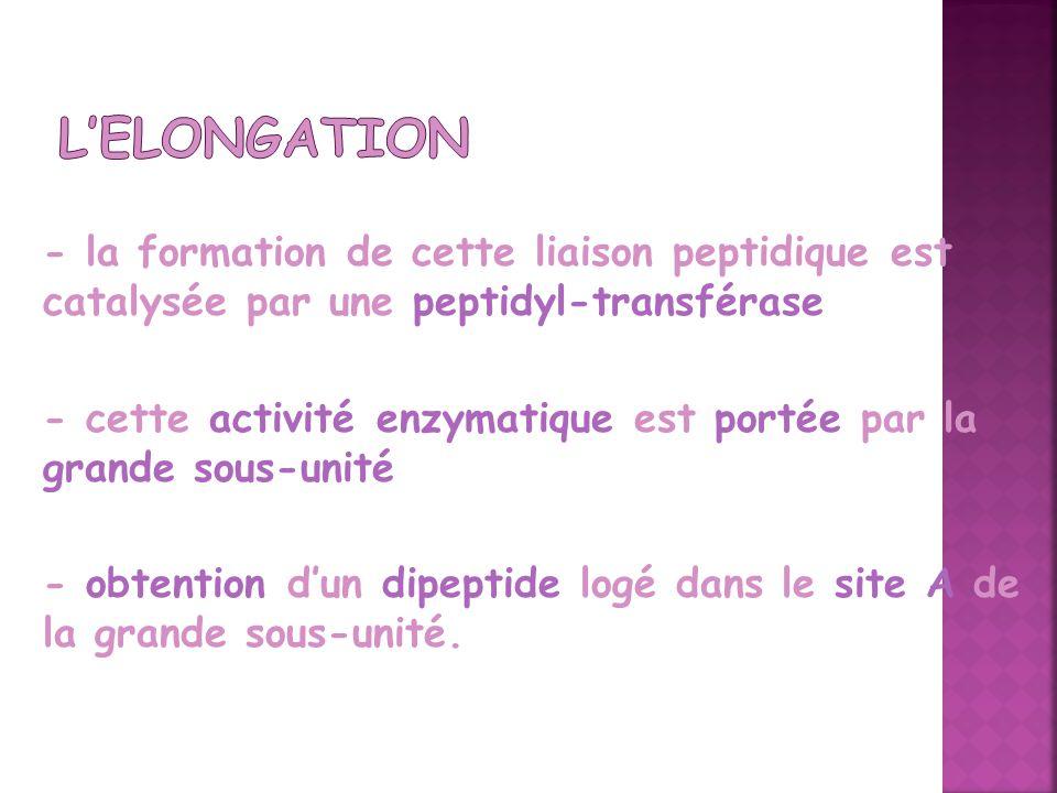 L'Elongation