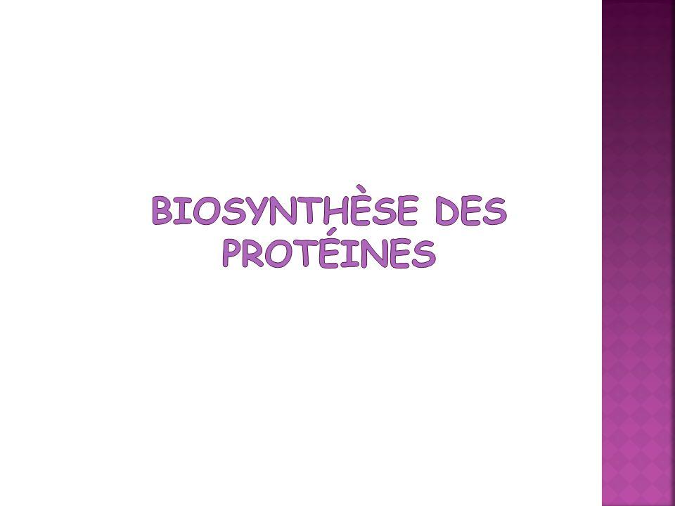 Biosynthèse des Protéines