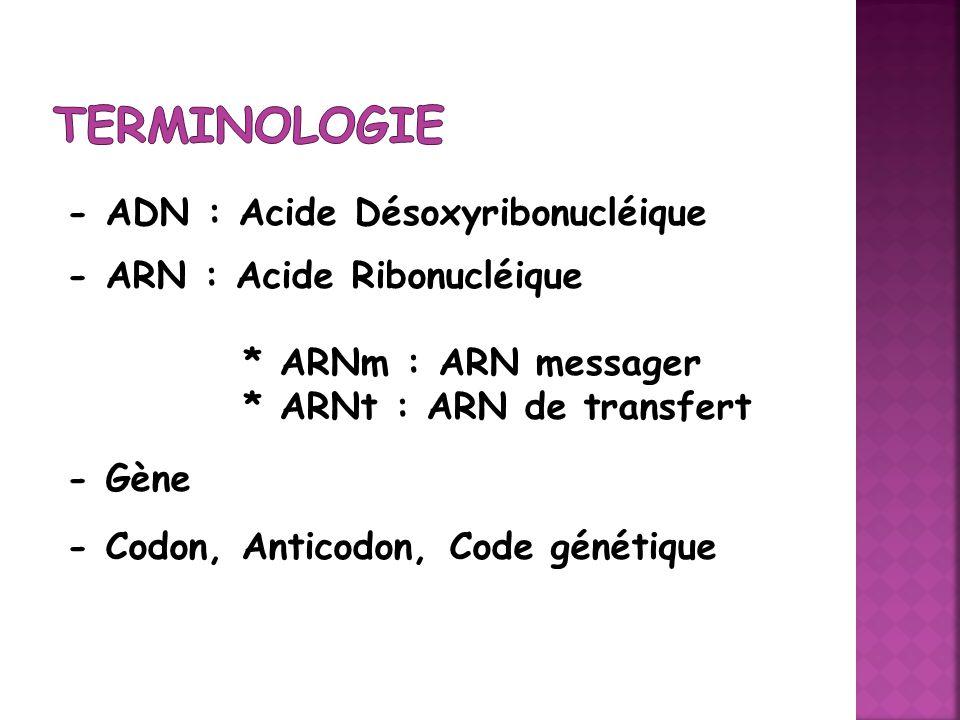 Terminologie - ADN : Acide Désoxyribonucléique