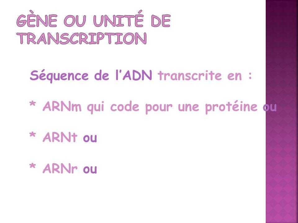 Gène ou Unité de transcription