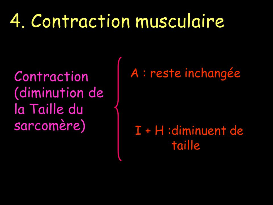 4. Contraction musculaire