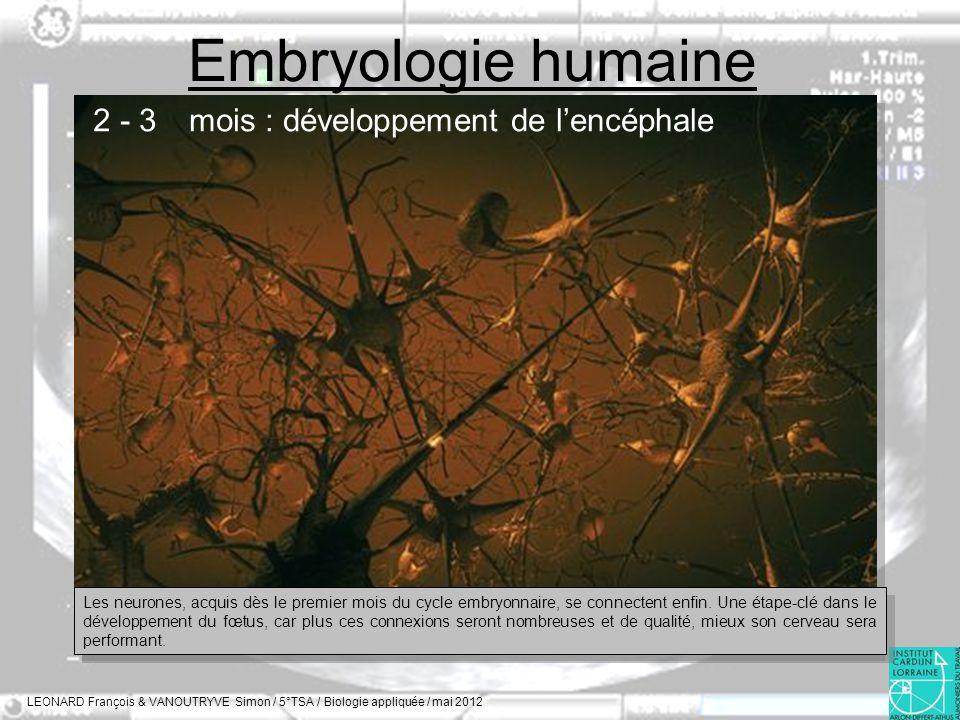 Embryologie humaine 2 - 3 mois : développement de l'encéphale