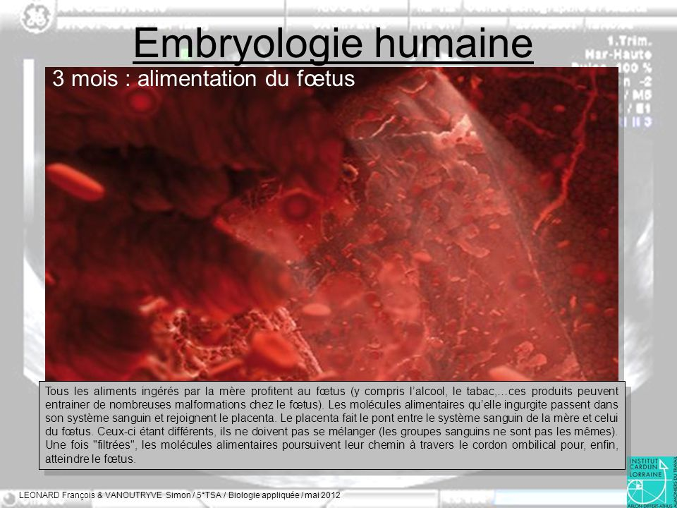 Embryologie humaine 3 mois : alimentation du fœtus
