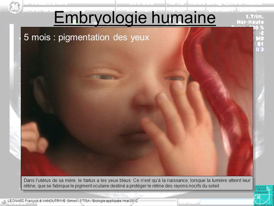 Embryologie humaine 5 mois : pigmentation des yeux