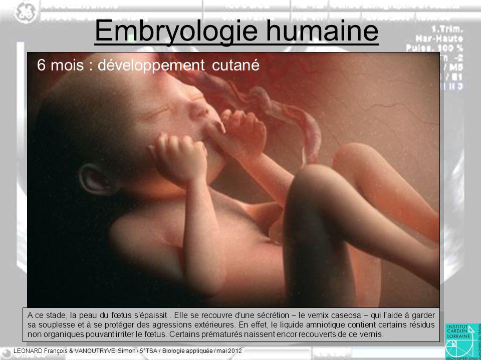 Embryologie humaine 6 mois : développement cutané