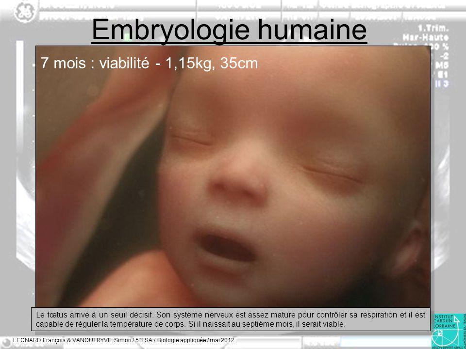 Embryologie humaine 7 mois : viabilité - 1,15kg, 35cm