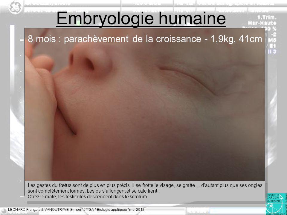 Embryologie humaine 8 mois : parachèvement de la croissance - 1,9kg, 41cm.