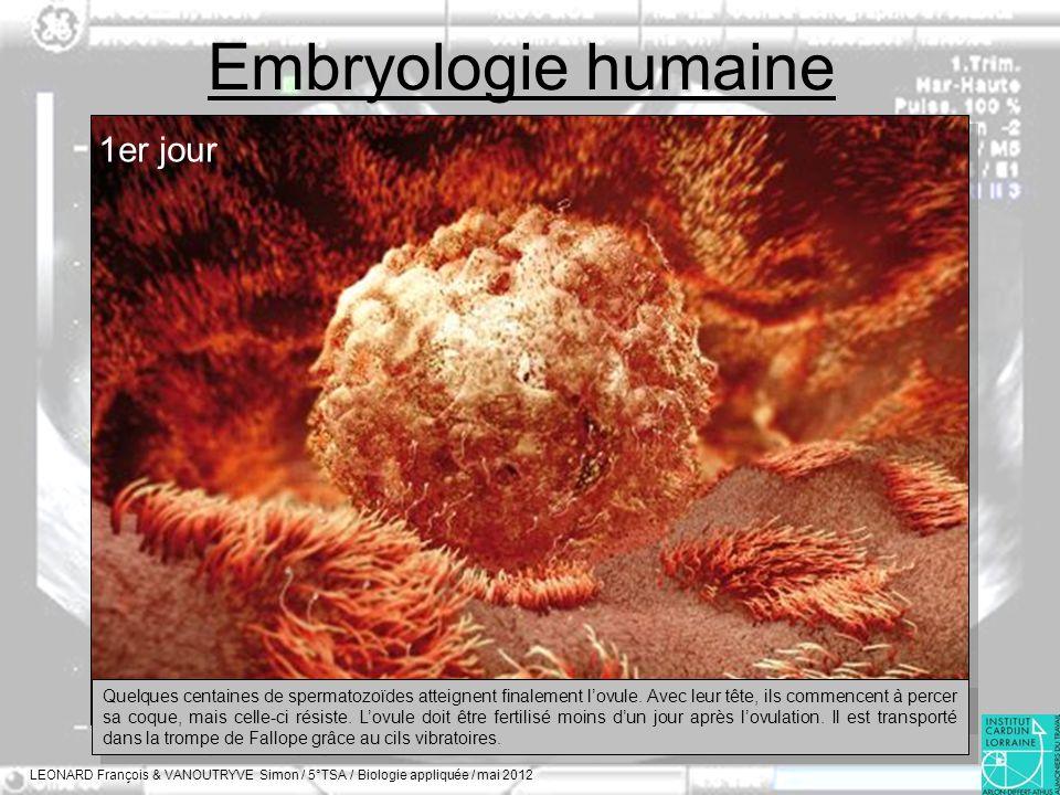 Embryologie humaine 1er jour