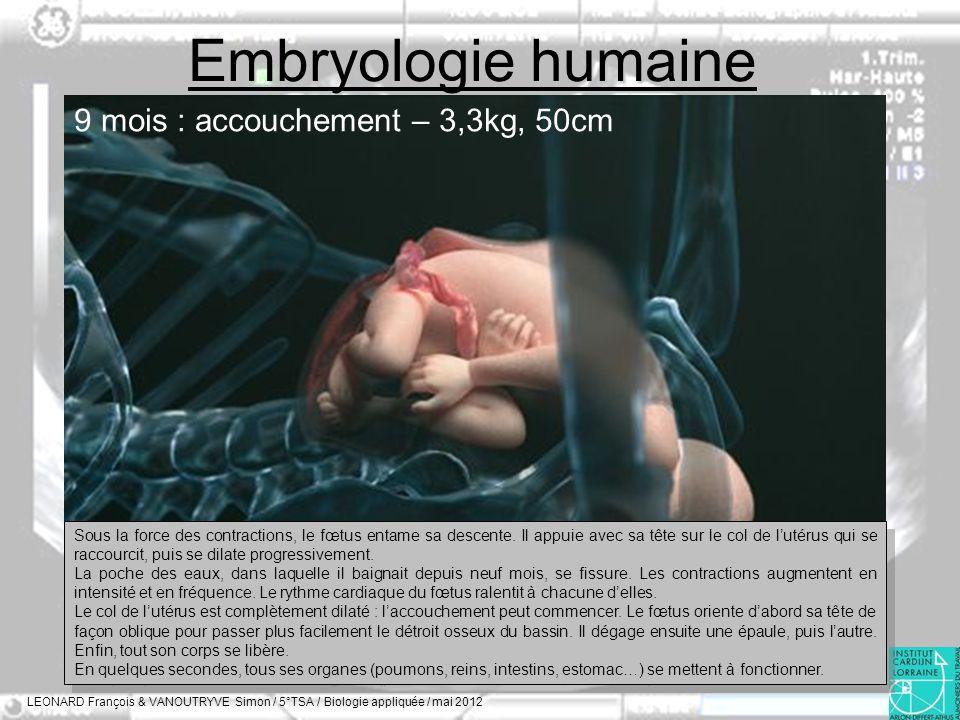 Embryologie humaine 9 mois : accouchement – 3,3kg, 50cm
