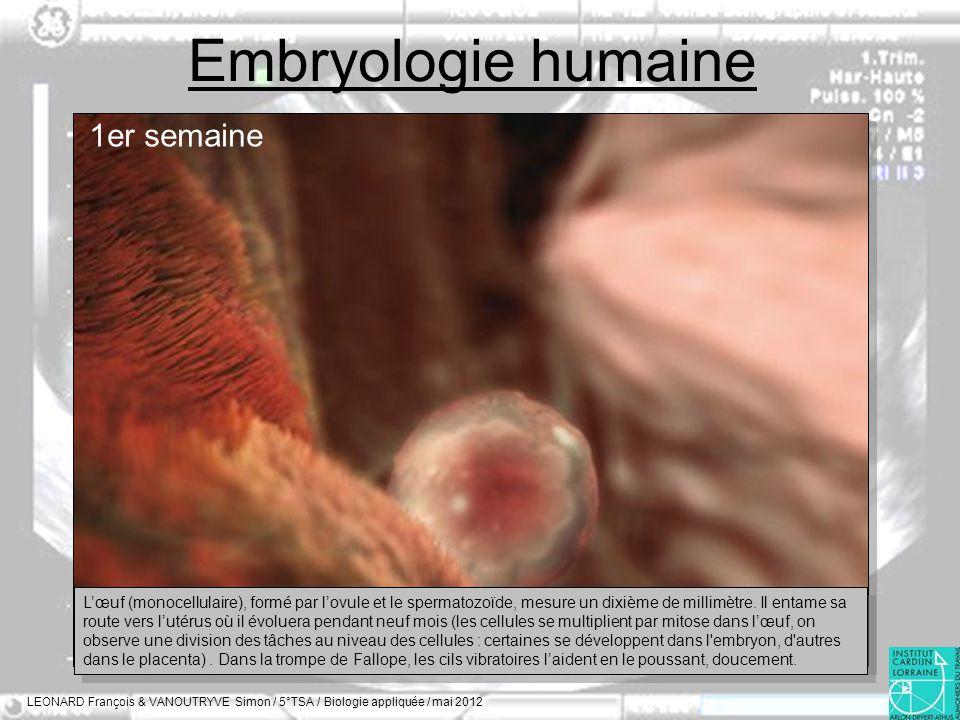 Embryologie humaine 1er semaine