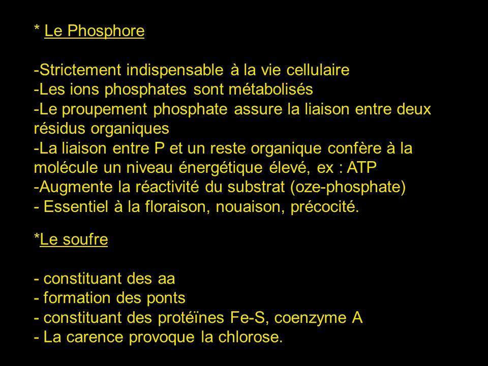 * Le Phosphore Strictement indispensable à la vie cellulaire. Les ions phosphates sont métabolisés.