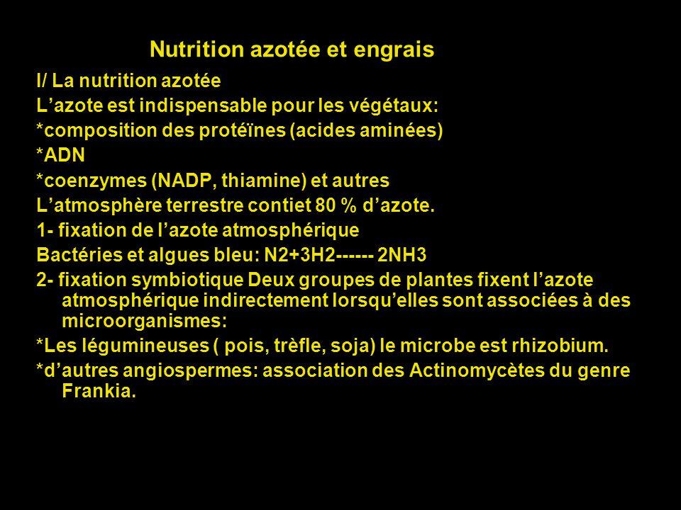 Nutrition azotée et engrais