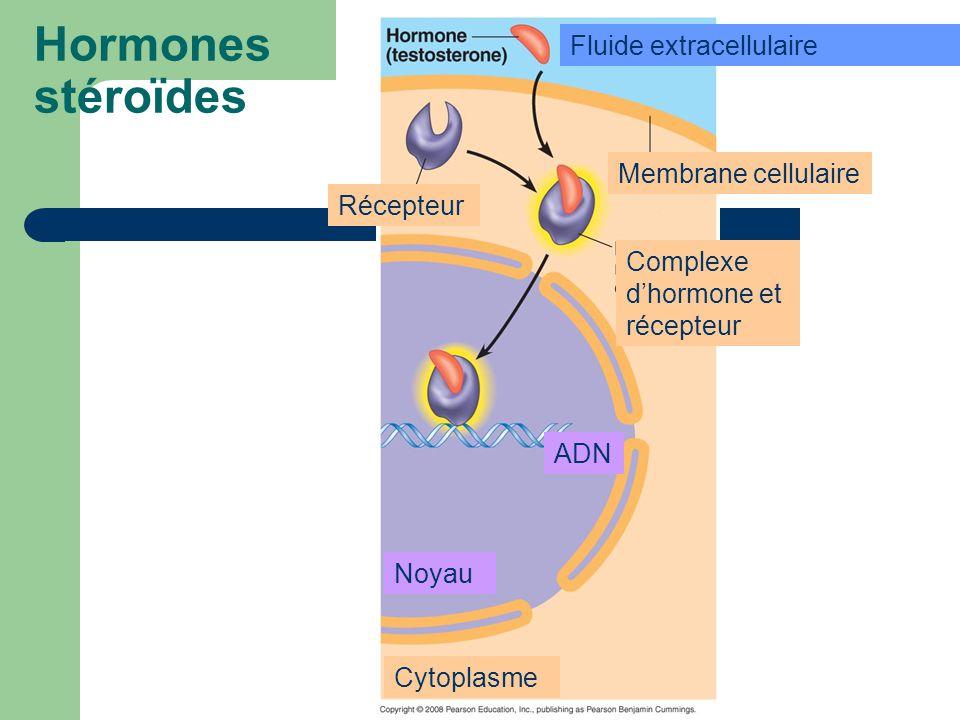 Hormones stéroïdes Fluide extracellulaire Membrane cellulaire